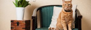 What to Keep in Mind When Staging a Home with Pets